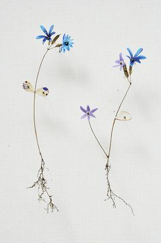 flower constructions | anne ten donkelaar