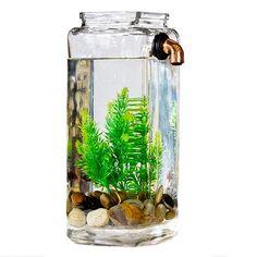 Betta fish tank ideas on pinterest 43 pins for Self cleaning fish tank