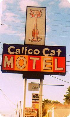 Calico Cat Motel Tacoma WA
