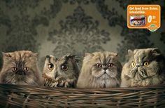 Which one of these is not like the others? #cats #marketing #advertising