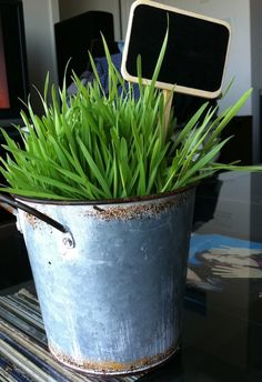 TIME To ::: Plant your Wheat Grass to use for St. Patrick's Day AND Easter -- click for great tutorial