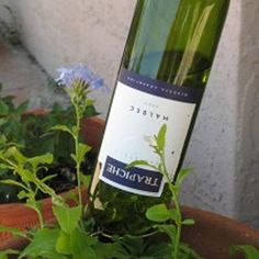 Water your garden with wine bottles instead of those 'globes'