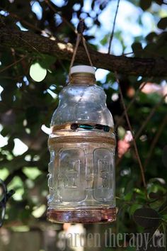How to make a recycled bottle wasp or yellow jacket trap via www.gardentherapy.ca