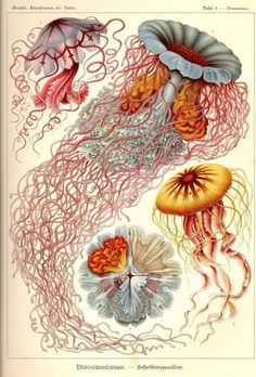 Thanksbeautiful biology illustrations. awesome pin