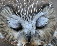 Great close-up of this owls eye lids showing the feathers protecting the eyes. https://www.facebook.com/groups/2204629517/