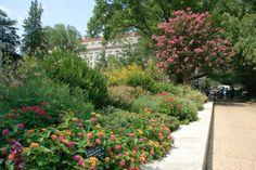 plant, smithsonian garden, habitat garden, butterfli habitat, nation museum