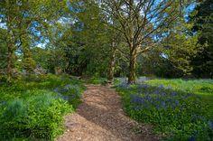 Blarney Gardens, Ireland