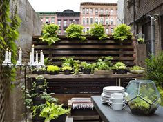 Tiny Urban Garden --> http://www.hgtv.com/decorating-basics/urban-spaces-creative-couples-shotgun-style-nyc-apartment/pictures/page-2.html?soc=pinterest