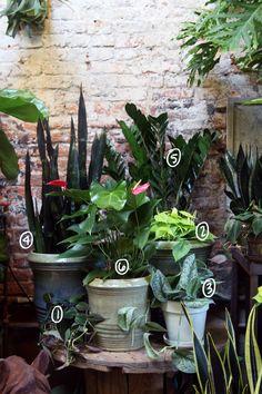 Low-light plants: 1. Philodendron 2. Philodendron 3. Pothos 4. Sanseviera 5. Z-Z Plant 6. Anthurium