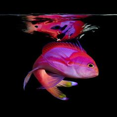 "Some-kinda Fish (watcha gonnado) ~ Miks' Pics ""Sea Life ll"" board @ http://www.pinterest.com/msmgish/sea-life-ll/"