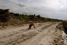The Many Faces of Illegal Logging in Kalimantan
