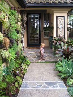 vertical garden, succulents, agave