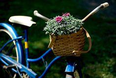 bicicle basket