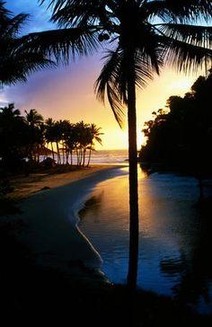 palm, brazil, jose beach, beach sunsets, tree, san jose, south america, tropical beaches, sweet dreams