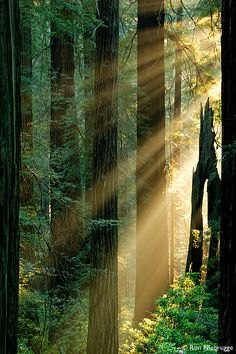 Redwood National Parks, California
