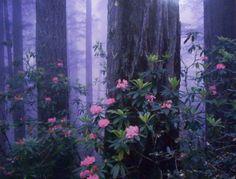 Beautiful - Landscape quilt inspiration