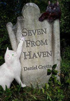 """""""Haven takes care of its own.""""  This book is outstanding! It neatly contains seven gentle, intriguing, always interesting brushes with the paranormal to satisfy the ghost story lover in you. Recommend. as a Halloween treat to yourself."""