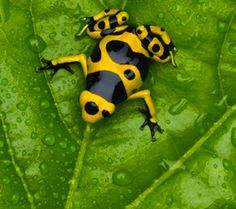 animals, animal pictures, natural history, natural colors, tree frogs, color patterns, poisons, bumble bees, mother nature