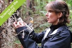 Producer's Notes: Science on the SPOT Revisiting Albino Redwoods