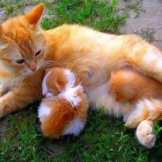 .The Kitty Family.