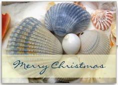 Seashell Holiday Christmas Cards