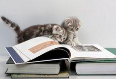 Kittens & books! Oh my!