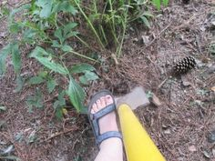 Digging Peony Plant