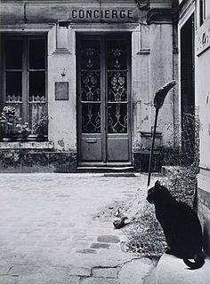by Willy Ronis, Le chat de la concierge rue de Tournon, 1957