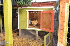 more chicken coops