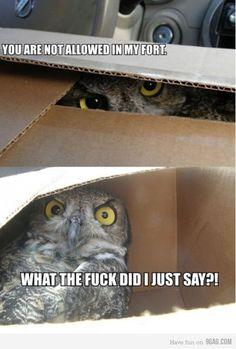 Fort Owl hahaha