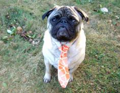 "Make a duct tape craft for your pet with this unique ""Business Time"" tie."