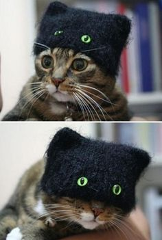 Chek out mai cat burglur hat!