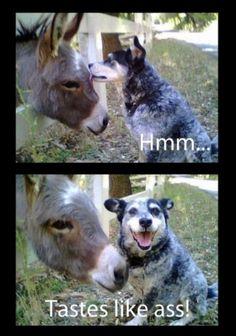 Oh man.....hilarious indeed