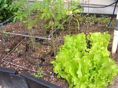 When to plant vegetables in Utah plant veggi, garden grow, planting in utah, plant veget, utah gardening
