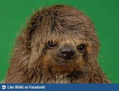 Chewbacca - the early years
