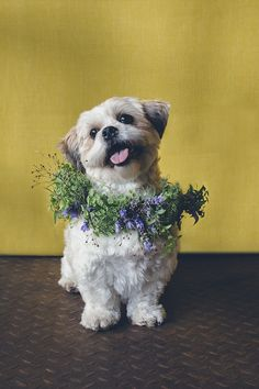 Pets in weddings ⎟I