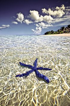 Blue Starfish, Tahiti, French Polynesia