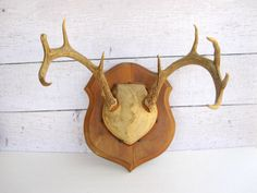 Mounted Deer Antlers  Woodland Deer Plaque  9 by LoveButlerVintage, $58.00