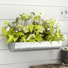 industrial wall planter