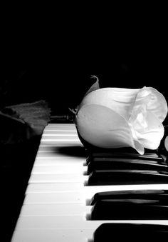 music, black n white, white roses, the piano, black white