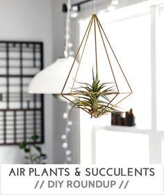 DIY || AIR PLANTS & SUCCULENTS DIY ROUNDUP - Very Shannon
