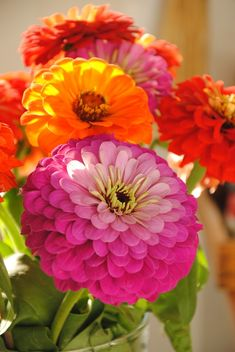 Zinnias--so easy to grow from seed. And so colorful in the summer when many other plants have finished blooming.