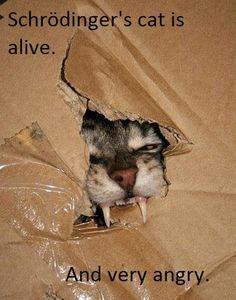 Schrödinger's Cat is Alive… [Pic]