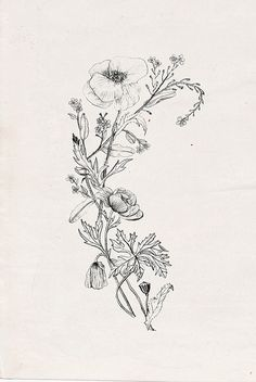 "Lovely: wildflowers with poppy (tattoo design commission) | Nadezda Fava via Flickr ""You belong among the wildflowers."""