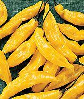 Hot Lemon Pepper Seeds and Plants, Vegetable Gardening at Burpee.com