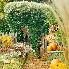 Sweet Autumn Clematis ~ Fragrant white flowers at seasons end.