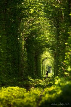 The Tunnel of Love | Amazing Snapz | Click to see more