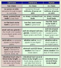 vegan nutrit, youth vegan, carnivor, vegan life, truth, herbivor, chart, vegan recip, vegan indecis
