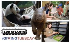 Make #GivingTuesday count! Nonprofits like Zoo Atlanta make a difference every day to wildlife around the world and to our community right here at home.