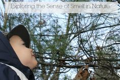 Exploring the sense of smell in nature - part of a series on exploring the 5 senses naturally!  Really neat ideas!  www.HowWeeLearn.com